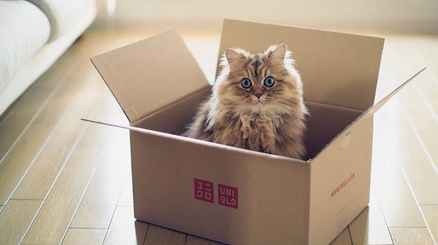 kutije petface