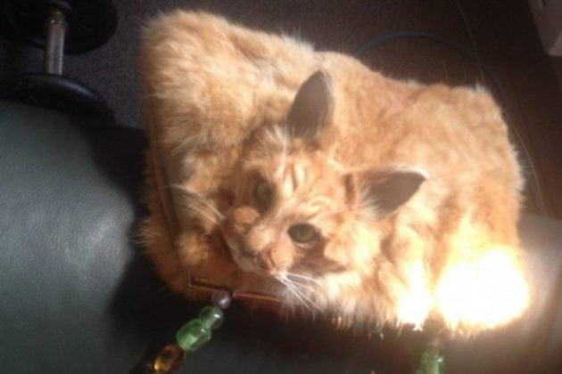 prepariranae mačka petface