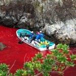 SPASIMO DELFINE: Jezive slike lova na delfine u Japanu!