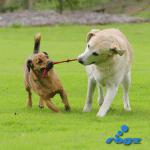 Istrenirajte psa da se igra sa vama
