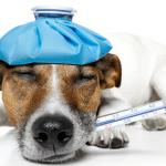 VRLO VAŽNO: Kako izmeriti temperaturu ljubimcu?