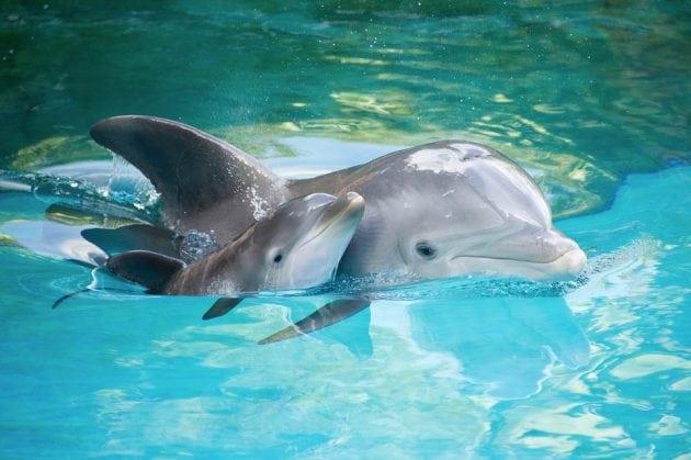 delfine petface