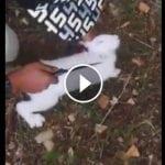 Dečak Lazar iz Zaječara uživo ubio životinju i hvalio se na Facebook-u!