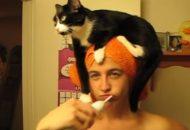 vaša mačka petface