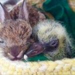 DIVNA PRIČA: Zec i golub srušili zid da bi bili zajedno!