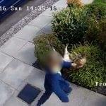 """VIDEO: Petogodišnjak zlostavlja mačku, a onda dobija """"osvetu"""" mace!"""
