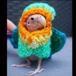 PRESLATKICA: Ćelavi papagaj, Rea, osvojila srca ljubitelja životinja!