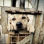 Ni posle dve godine Aranđelovac nema OBEĆANI azil za napuštene pse!
