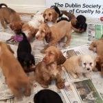PORAŽAVAJUĆE: Evo u kojoj državi cveta kriminal – krijumčarenje pasa, profit 20 miliona evra!