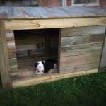PANČEVO: Kućice za napuštene životinje povodom svetskog dana životinja!