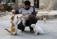 Siriji petface