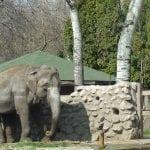 """POSLEDNJE ZBOGOM: Uginula slonica Marta – """"prva dama"""" Zoo vrta na Paliću!"""