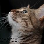 BIOGANCE vam pomaže: Kako da očistite svojoj maci uši?