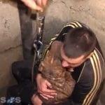 NIŠ: Komšije spasile dva pitbula iz bunara dubokog 18 metara!