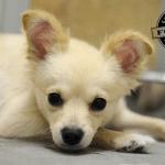 Emotivan susret kuje sa štencima od kojih je bila odvojena