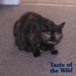 Mačka rizikovala život da spasi porodicu od požara