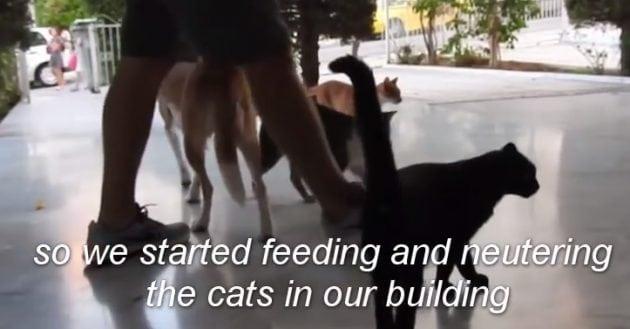 hrane 30 uličnih mačaka petface2
