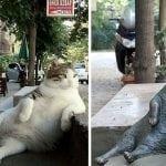 Sećate se OVE mačke čuvene po pozi u kojoj je uslikana? Uginula je, ali i dobila SPOMENIK!