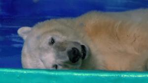 najtužniji medved petface