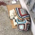 Bila je pas na ivici života, ali su je ove devojke spasile i dale ime – Mila!