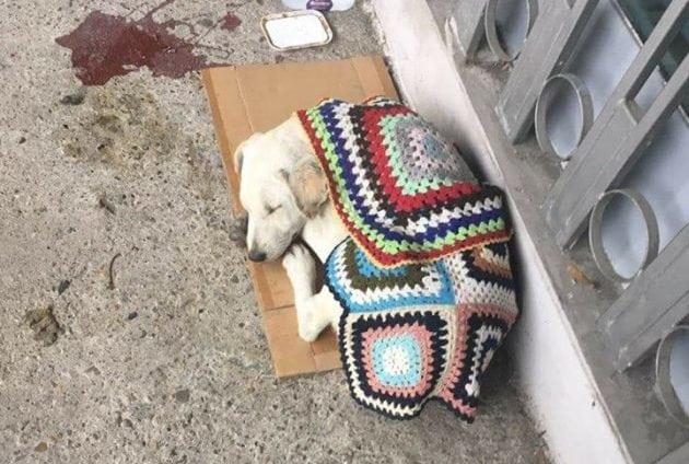 pas na ivici života petface
