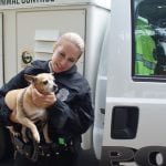 KONAČNO: Prva policija za životinje i sklonište za mačke uskoro kod suseda!