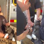Mačka preživela tako što se tokom požara sakrila u šporet