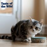 Zašto je mačkama potrebna ishrana bogata proteinima?