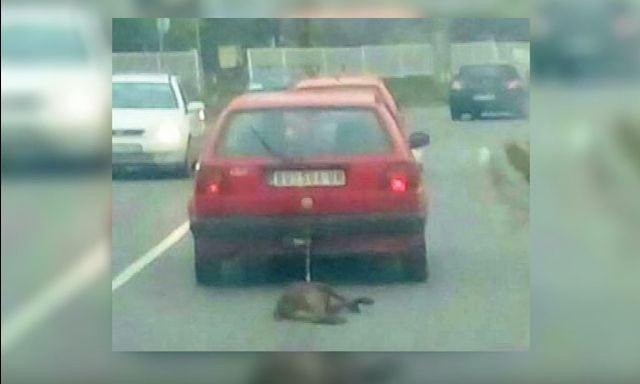 psa za automobil IZ GROCKE petface