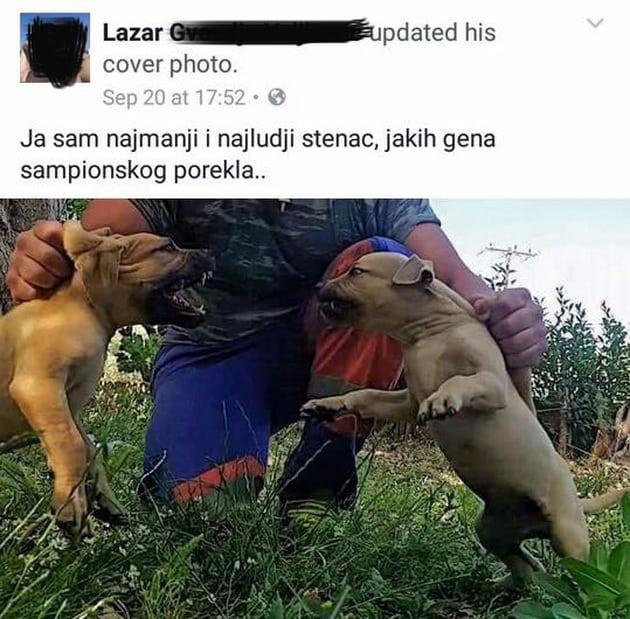 pse za borbe petface