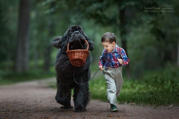 veliki psi petface