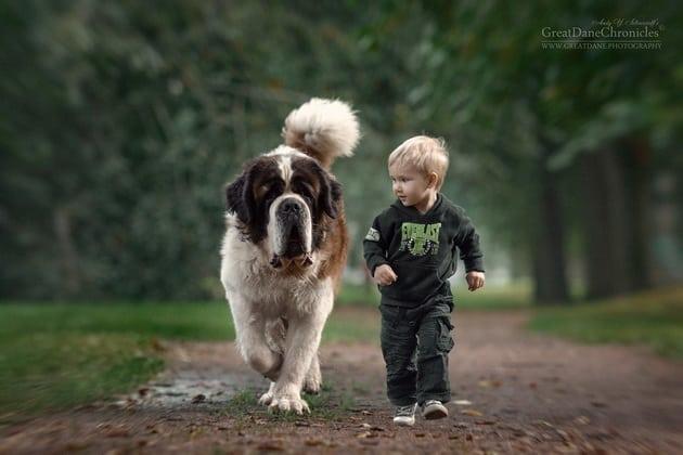veliki psi petface10