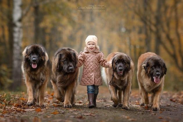 veliki psi petface3