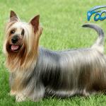 FOOLEE predstavlja 10 rasa pasa sa najdužom dlakom