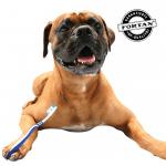 FORTAN vam pomaže: Kako da očistite zube svom psu?