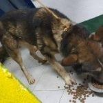"""TIJANA: """"U azilu u Rumi se dešavaju strašne stvari. Psi umiru gladni i žedni""""!"""