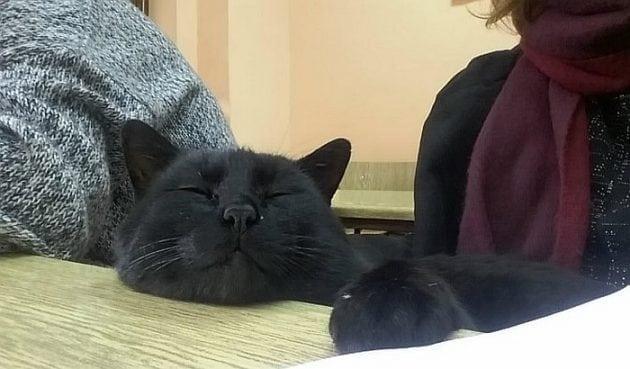 Mačak Bleki petface