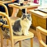 Sa macom na povocu u obližnji kafić? Da moguće je!