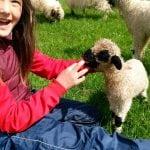 SVET PODELJEN: Da li su vama ove ovce slatke ili strašne?