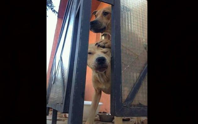 pse na terasi petface