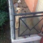 MIRIJEVO: Vlasnici pobegli iz stana u kom su držali pse na terasi! Psi zarobljeni, HITAN SMEŠTAJ!