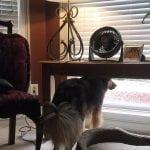 VIDEO: Tužni pas Bo, svaki dan čeka vlasnicu koja je otišla u drugi grad na Fakultet!