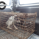 Pas Liska zatvoren u malom kavezu konačno na slobodi