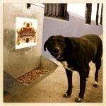 U FINALU: Ako želite da psi dobiju hranilice na otvorenom i teretanu – GLASAJTE!