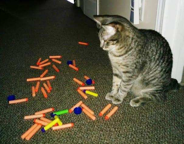 mačka je lopov petface