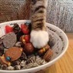 ŠTA DA RADIM: Ljudi, moja mačka je lopov!