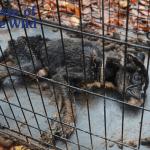 Pas zaključan u kavezu u sopstvenom izmetu oporavio se uz ljubav
