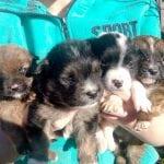 KRAGUJEVAC: Pronašli 6 štenaca pored upucane kuje – HITNO traže dom!