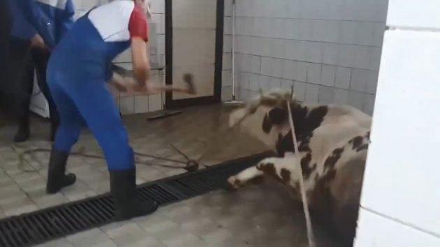 Mučenje petface