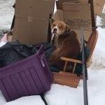 DIRLJIV PRIZOR: Pas čeka vlasnike koji su ga izbacili poput smeća!